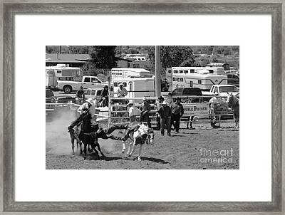 Steer Wrestling Framed Print by Susan Chandler