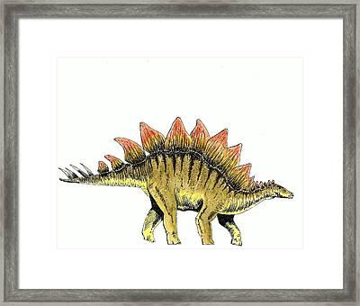 Stegosaurus Framed Print by Michael Vigliotti