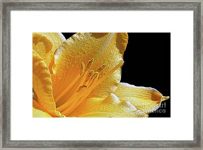 Stella D'oro - Day Lily Framed Print by Kaye Menner