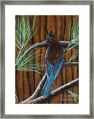 Framed Print featuring the painting Stellar Jay by Jennifer Lake