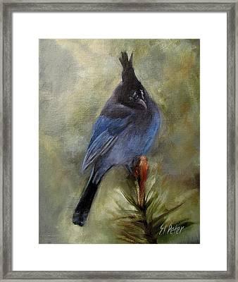 Stellar Of A Bird Framed Print by Mary St Peter