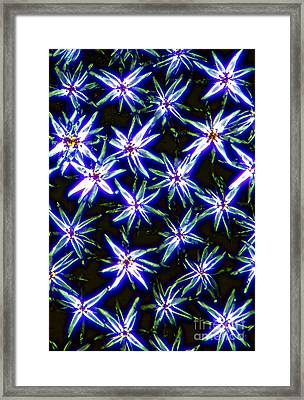 Stellate Hairs, Niphobolus Framed Print by M. I. Walker