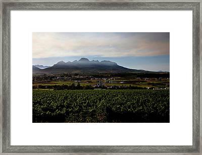 Stellenbosch Vineyard Framed Print by Dale Halbur