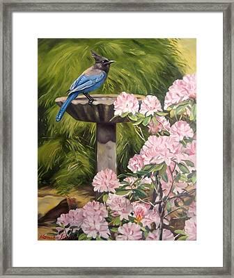 Steller Jay Framed Print by Norman Kelly