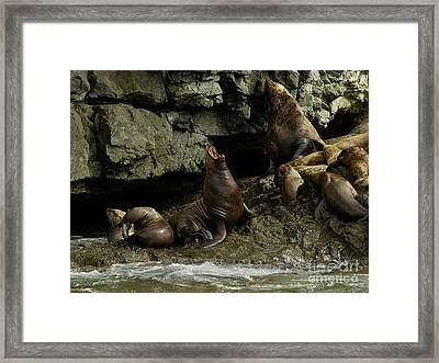 Alaskan Steller Sea Lions #3 Framed Print by Teresa A and Preston S Cole Photography