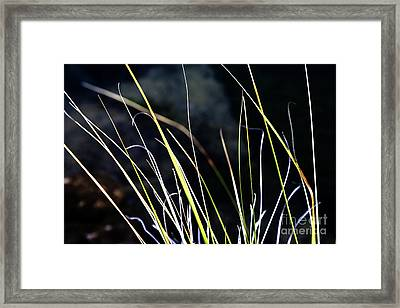 Stems Framed Print