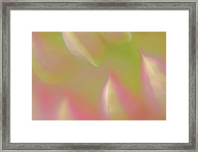 Step Closer Framed Print by Bonnie Bruno