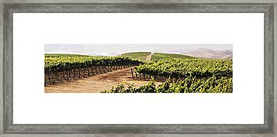 Step Into My Vineyard Framed Print by Marilyn Hunt