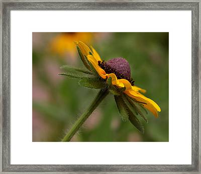 Framed Print featuring the photograph Steppin Out by Tammy Espino