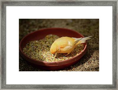 Stepping Into The Light Framed Print