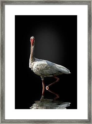 Stepping Out Framed Print by Cyndy Doty