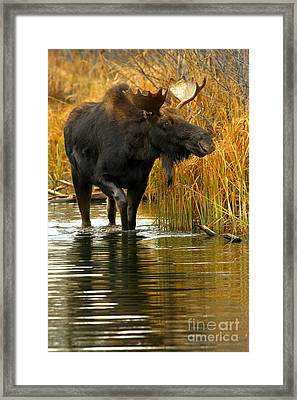 Stepping Through The March Framed Print
