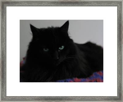 Framed Print featuring the photograph Stern Look by AJ Brown