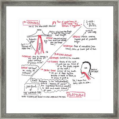 Sternalis And Platysma Framed Print