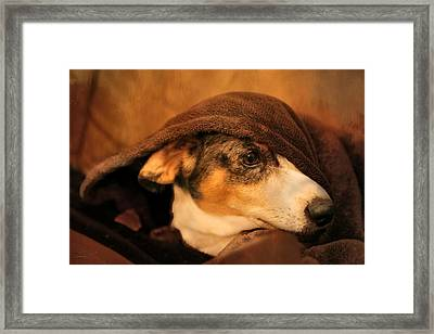 Stewie Under Cover Framed Print by Theresa Campbell