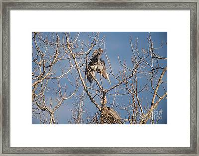 Framed Print featuring the photograph Stick Acceptance by David Bearden