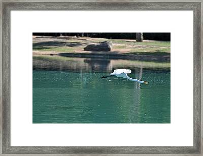 Sticking His Neck Out Framed Print by Teresa Blanton
