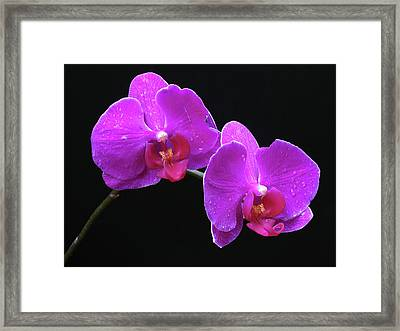 Sticking With You Framed Print