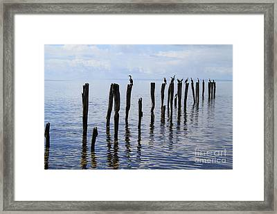 Framed Print featuring the photograph Sticks Out To Sea by Stephen Mitchell