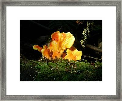 Sticky Fungus Framed Print by Klee Miller