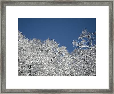 Sticky Trees Framed Print by Michael Piotrowski