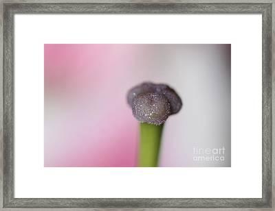 Stigma Of A Lily Framed Print