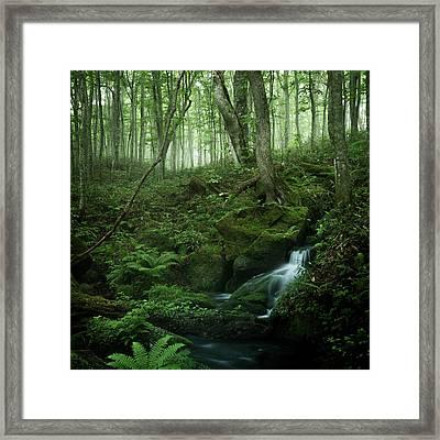Still And Silent Framed Print by Masa Onikata
