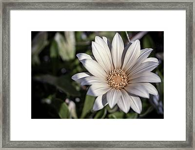 Still Dreaming Framed Print