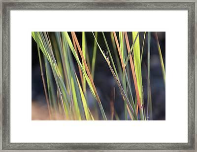 Still Emerging - Framed Print