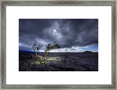 Framed Print featuring the photograph Still Fighting by Dan Mihai