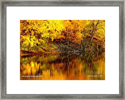 Still Gold Framed Print