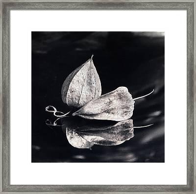 Still Life #14167 Framed Print