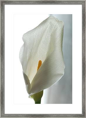 Still Life Calla Framed Print by Terence Davis