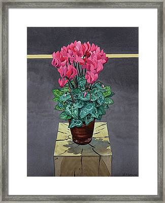 Still Life Cyclamen Framed Print