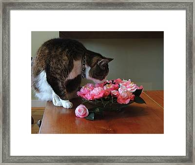 Still  Life Interrupted  Framed Print