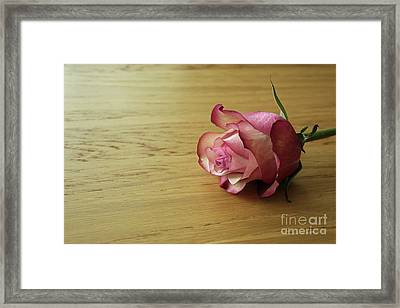 Still Life, Macro Photo Of Pink Rose Flower Framed Print by Pixelshoot Photography
