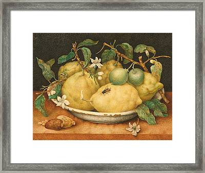 Still Life With A Bowl Of Citrons Framed Print by Giovanna Garzoni