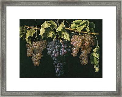 Still Life With Four Bunches Of Grapes Framed Print by Fernandez El Labrador Juan