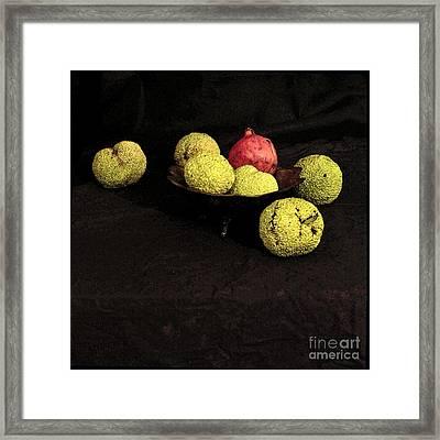 Still Life With Horse Apples Framed Print
