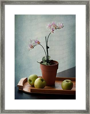 Still Life With Orchids And Green Apples Framed Print by Maggie Terlecki