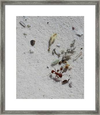 Still Life With Red Ant Framed Print