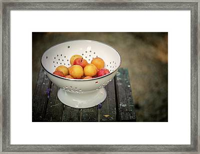 Still Life With Yellow Plums  Framed Print