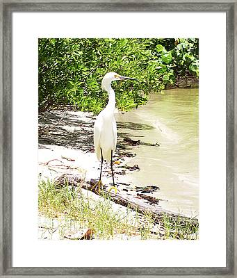 Still Looking For Lunch Gp Framed Print by Chris Andruskiewicz