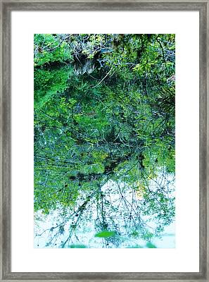 Still Framed Print by Lynda Dawson-Youngclaus