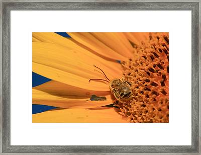 Framed Print featuring the photograph Still Sleeping by Chris Berry