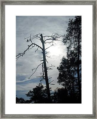 Still Standing Framed Print by Warren Thompson