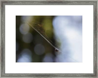 Still Vibration Framed Print