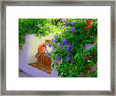 Still Waiting Framed Print by David  Van Hulst