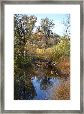Still Waters  Framed Print by Pamela Patch