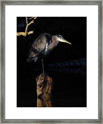 Stillness On The Hunt Framed Print